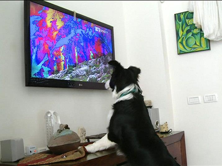 Dog TV - TV Especializada para Cães