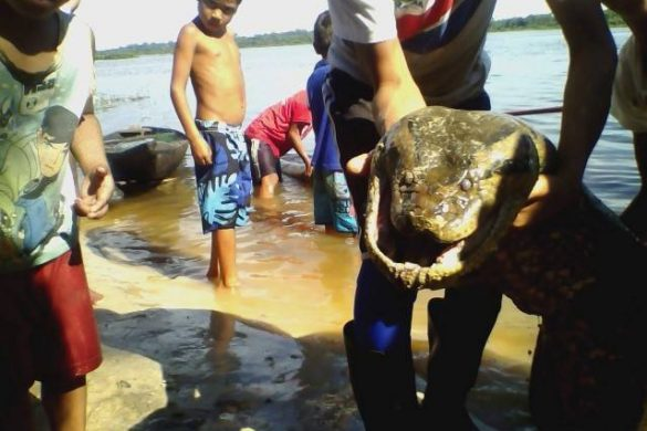Cobra Grande no Amazonas