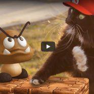 O gato no Super Mário da vida real