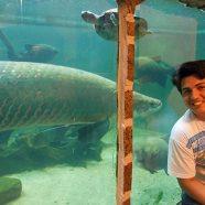 Ideia para um Aquário de Manaus