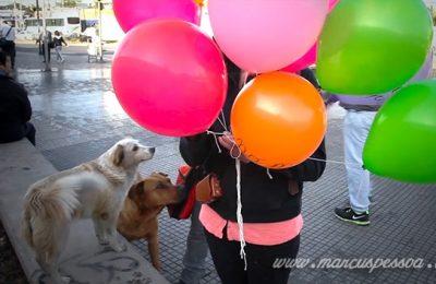 Intervenção Urbana com Cachorros de Rua