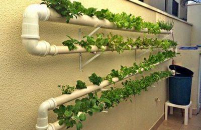Confira como funciona o método de plantação criativa com hidroponia