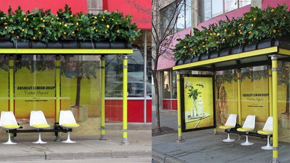 frutas cítricas no telhado verde desse ponto de ônibus | imagem: worthviral