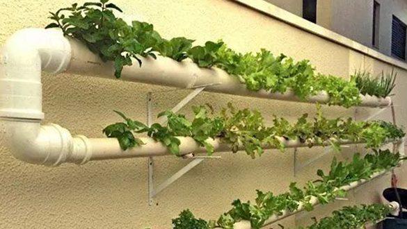 Método de plantação criativa com hidroponia